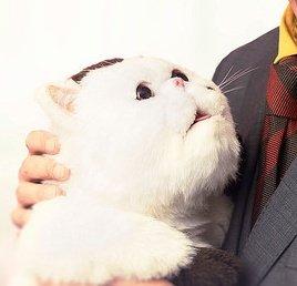 【おじさまと猫】ドラマで使われるぬいぐるみのふくまる